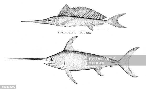 Swordfish engraving 1898