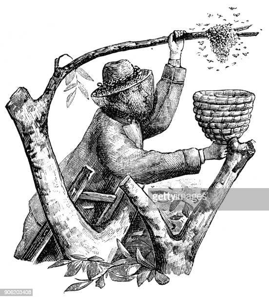 Symbolic letter W and a beekeeper with basket