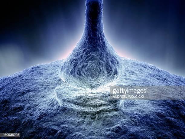synapse, artwork - synapse stock illustrations