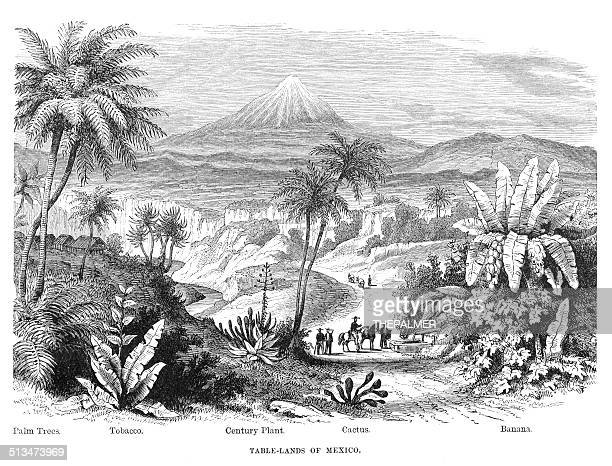 table-land of mexico engraving illustration - ancient stock illustrations, clip art, cartoons, & icons