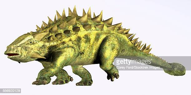 talarurus was a herbivorous dinosaur with a club tail that lived during the cretaceous period of mongolia. - thyreophora stock illustrations, clip art, cartoons, & icons