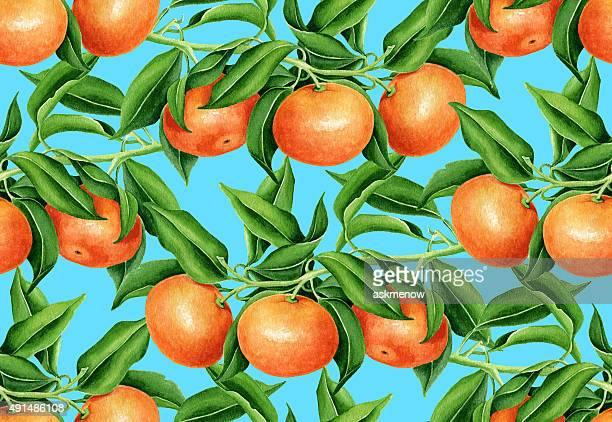 ilustrações de stock, clip art, desenhos animados e ícones de tangerina padrão - laranjeira