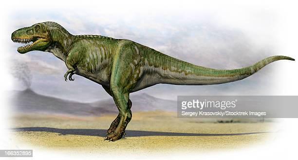 ilustraciones, imágenes clip art, dibujos animados e iconos de stock de tarbosaurus bataar, a prehistoric era dinosaur from the late cretaceous period. - paleobiología