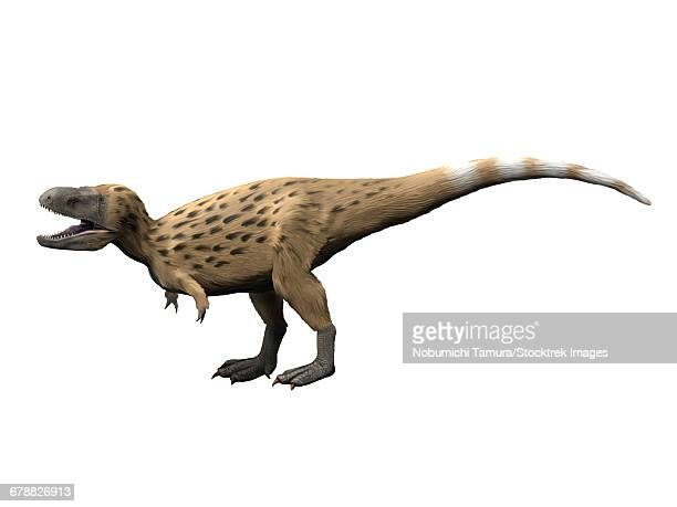 Tarbosaurus is a theropod dinosaur from the Late Cretaceous period.