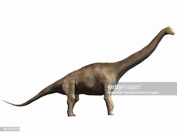 Tastavinsaurus sanzi, Early Cretaceous of Spain.