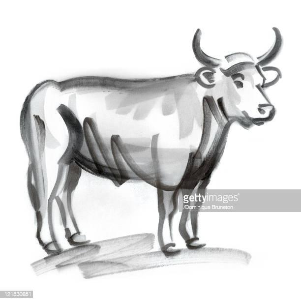 taurus astrological sign, illustration - bull market stock illustrations, clip art, cartoons, & icons