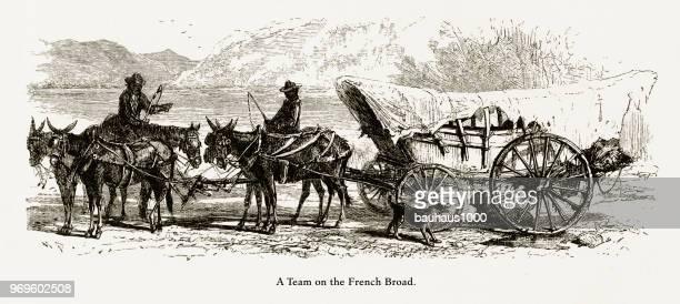 ilustraciones, imágenes clip art, dibujos animados e iconos de stock de equipo de caballos tirando de un carro en el amplio río francés, carolina del norte, estados unidos, americano grabado victoriano, 1872 - mula