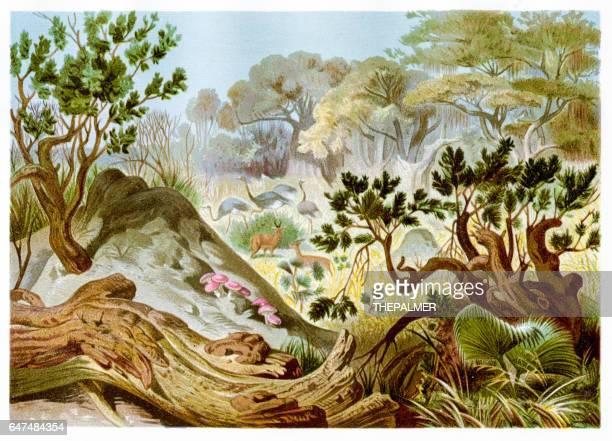 illustrations, cliparts, dessins animés et icônes de colline de termites chromolithographie 1884 - termite