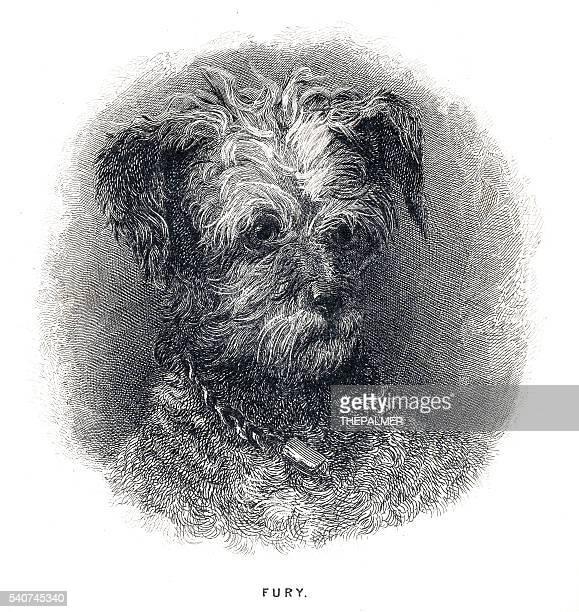 illustrations, cliparts, dessins animés et icônes de terrier chien gravure 1841 - norfolk terrier