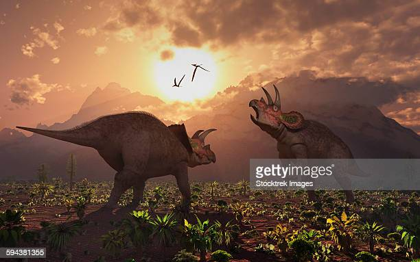 Territorial confrontation between two male Triceratops during the Cretaceous period of time.