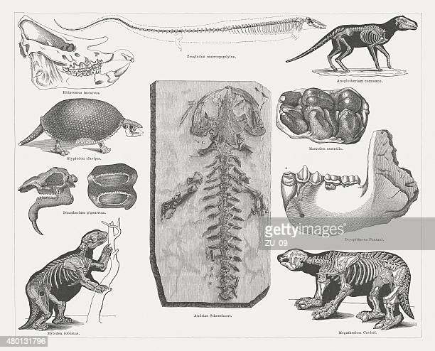 Tertiary fossils, published in 1878