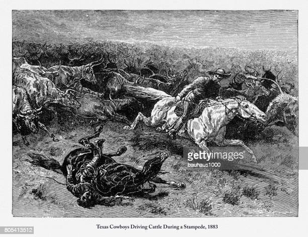 Texas Cowboys Driving Cattle, Early American Engraving, 1883