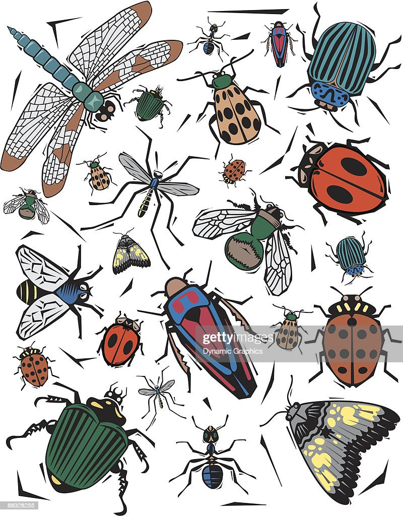 Texture, insects  Color  Illustrator Ver. 5 : stock illustration
