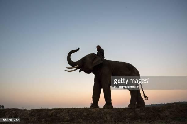 Thailand Mahout man and elephant