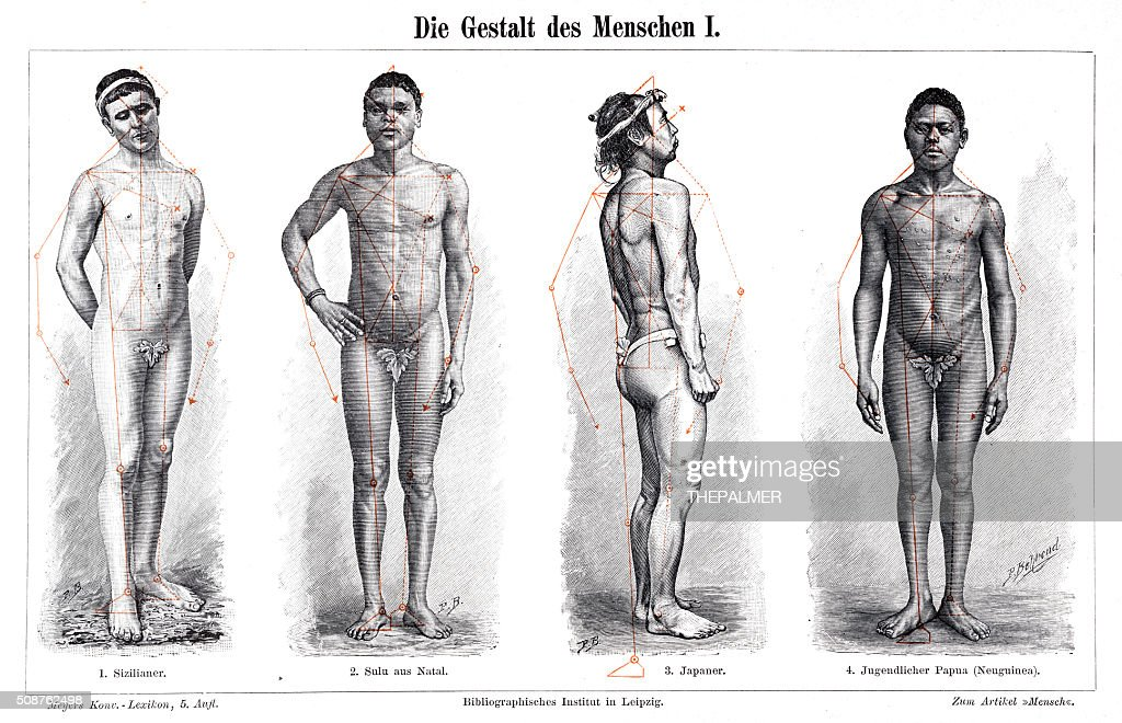 The Anatomy Form Of Men 1897 Stock Illustration Getty Images
