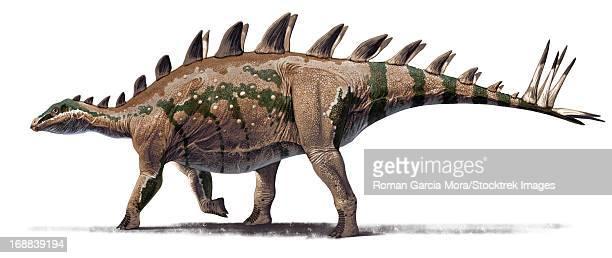 the basal stegosaurid tuojiangosaurus multispinus, from shishugou, china. oxfordian, late jurassic.  - scute stock illustrations, clip art, cartoons, & icons