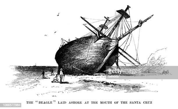 The Beagle laid ashore in Santa Cruz on the Galapagos Islands