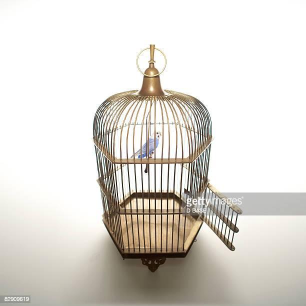ilustraciones, imágenes clip art, dibujos animados e iconos de stock de the blue bird in the cage with open door. - uncertainty