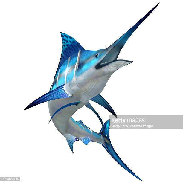 the blue marlin is a popular big game fish for fishermen and inhabits oceans throughout the world. - marlin stock illustrations, clip art, cartoons, & icons