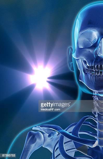 illustrations, cliparts, dessins animés et icônes de the bones of the face, neck and shoulder - images