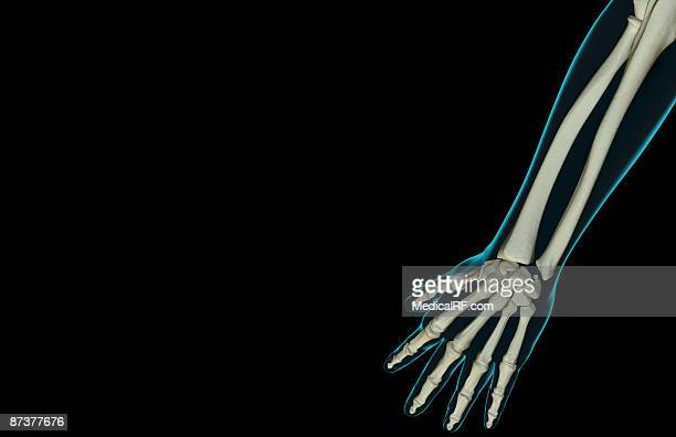 the bones of the forearm - trapezoid stock illustrations