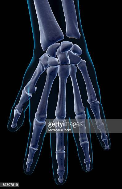 the bones of the hand - trapezoid stock illustrations