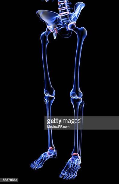 ilustraciones, imágenes clip art, dibujos animados e iconos de stock de the bones of the lower body - hueso de la pierna