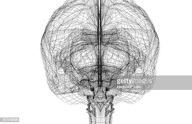 the brain - basal ganglia stock illustrations, clip art, cartoons, & icons
