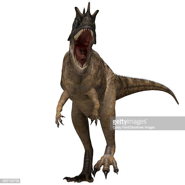The Ceratosaurus is a horned theropod dinosaur found in North America from the Jurassic Period.