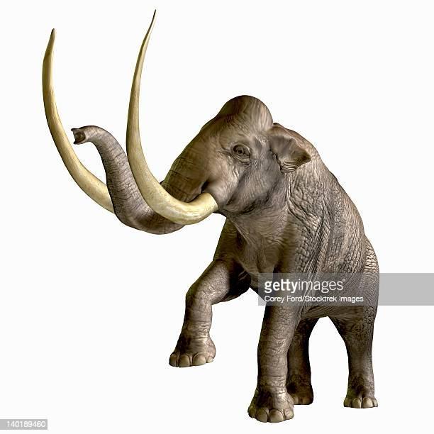 The Columbian Mammoth