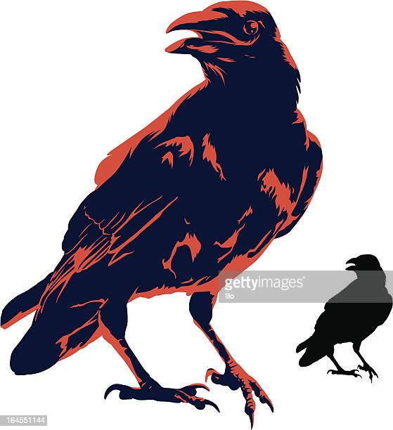 the crow - crow stock illustrations