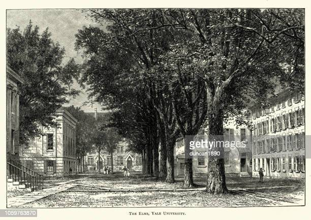 The Elm trees, Yale University, 19th Century