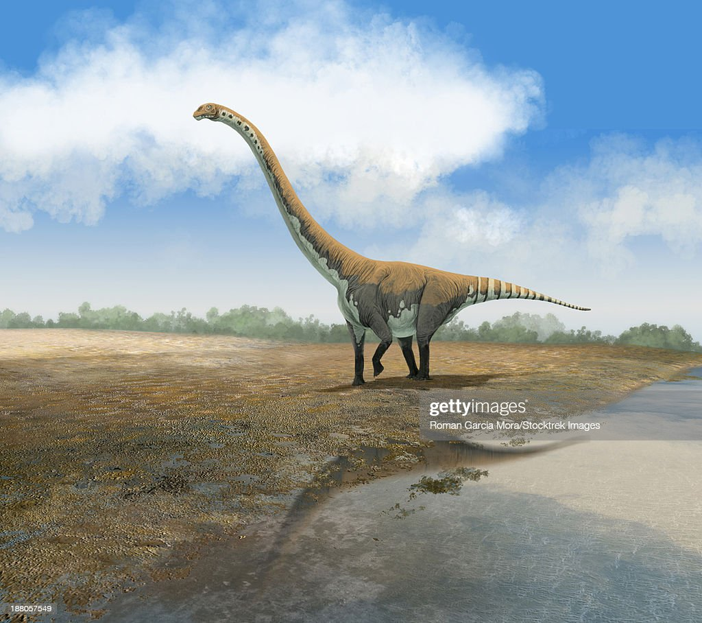 The Euhelopus sauropod, Omeisaurus tianfuensis, from the Middle Jurassic of Asia. : stock illustration