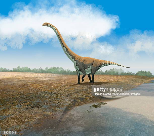 The Euhelopus sauropod, Omeisaurus tianfuensis, from the Middle Jurassic of Asia.