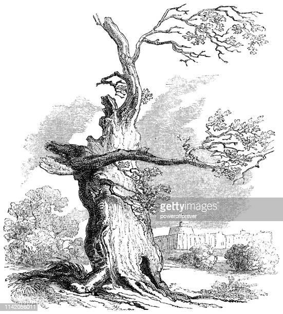 The First Herne's Oak at Home Park in Windsor, England - 18th Century