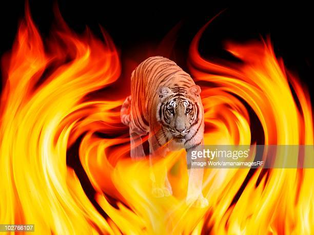 the flame and bengal tiger which burn - stealth点のイラスト素材/クリップアート素材/マンガ素材/アイコン素材