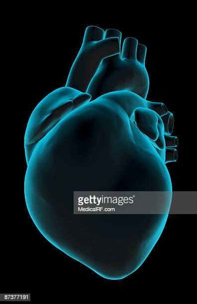 the heart - heart ventricle stock illustrations