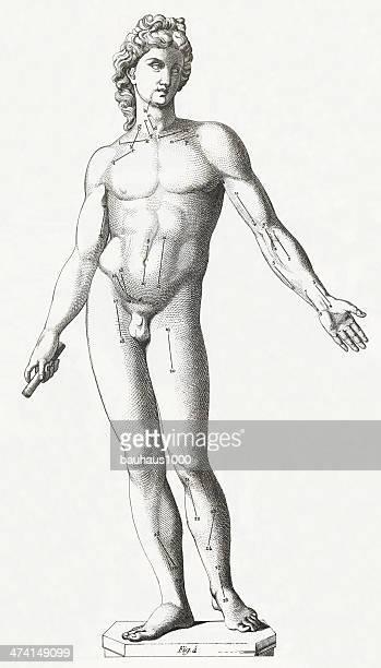 bildbanksillustrationer, clip art samt tecknat material och ikoner med the human body engraving - naket