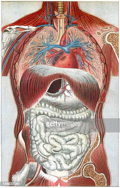 人体の - 人体図点のイラスト素材/クリップアート素材/マンガ素材/アイコン素材