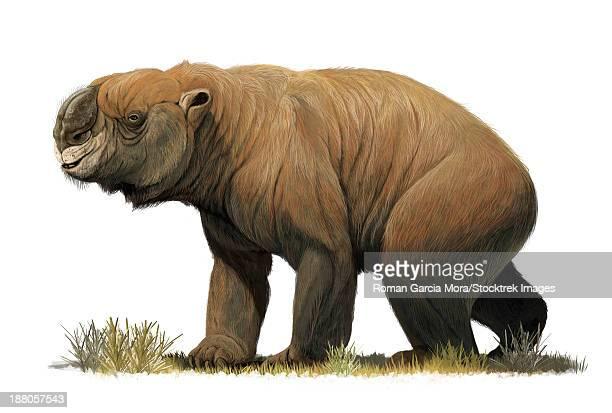 the largest known marsupial, diprotodon optatum, from the pleistocene of australia. - mammal stock illustrations