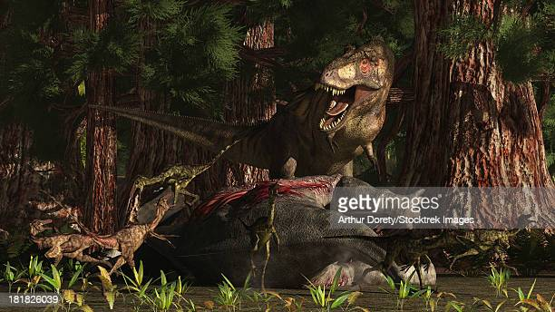 The late Cretaceous circa 66 million years ago. Tyranosaurus Rex returning to his kill and finding some poaching Dromaeosaurid (raptor) type of dinosaurs.