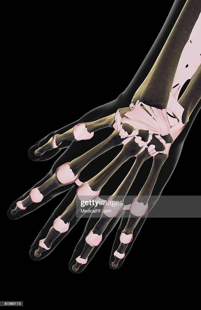 The Ligaments Of The Hand Stock Illustration Getty Images