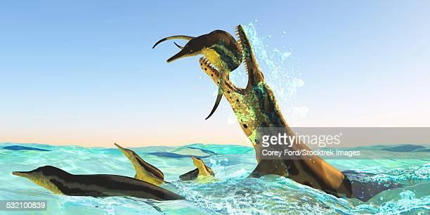 ilustraciones, imágenes clip art, dibujos animados e iconos de stock de the marine reptile, kronosaurus, attacks a pod of dolphin-like dolichorhynchops in cretaceous seas. - plesiosaurio