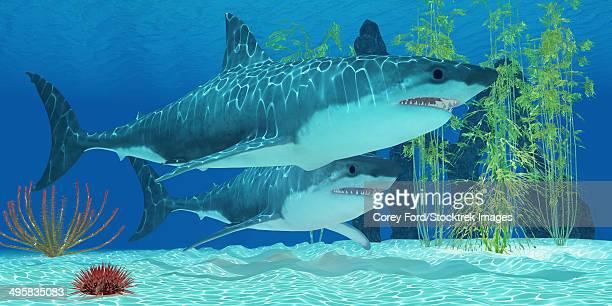 ilustraciones, imágenes clip art, dibujos animados e iconos de stock de the megalodon is an extinct megatoothed shark from prehistoric seas and was 20.3 meters or 67 feet long. - paleobiología