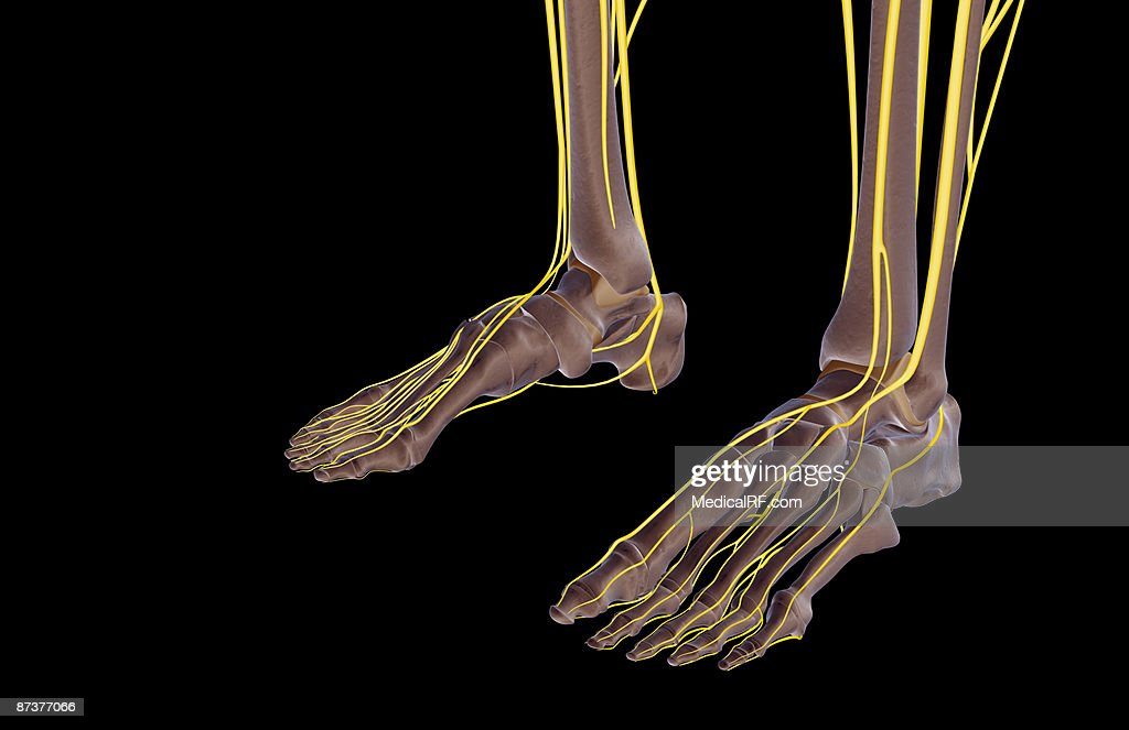 The Nerves Of The Feet Stock Illustration Getty Images