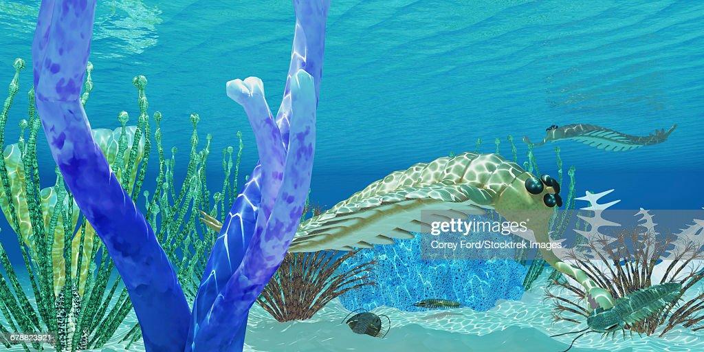 The predator Opabinia uses its proboscis to eat a trilobite in a Cambrian ocean. : stock illustration