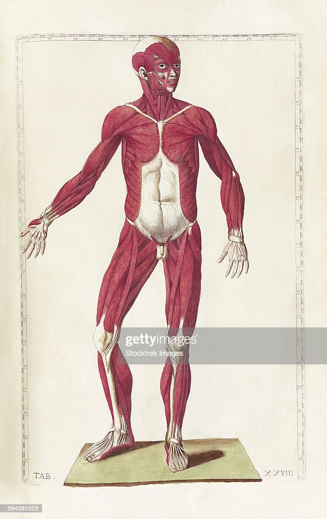The Science Of Human Anatomy By Bartholomeo Eustachi Stock