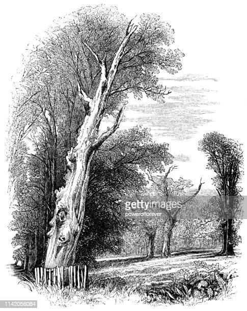 The Second Herne's Oak at Home Park in Windsor, England - 19th Century
