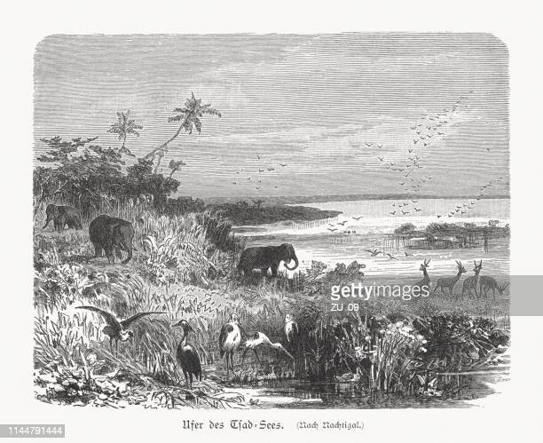 The shore of Lake Chad, Africa, wood engraving, published 1897
