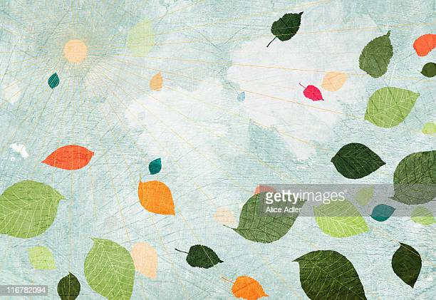 the sun and floating leaves - outdoors stock illustrations